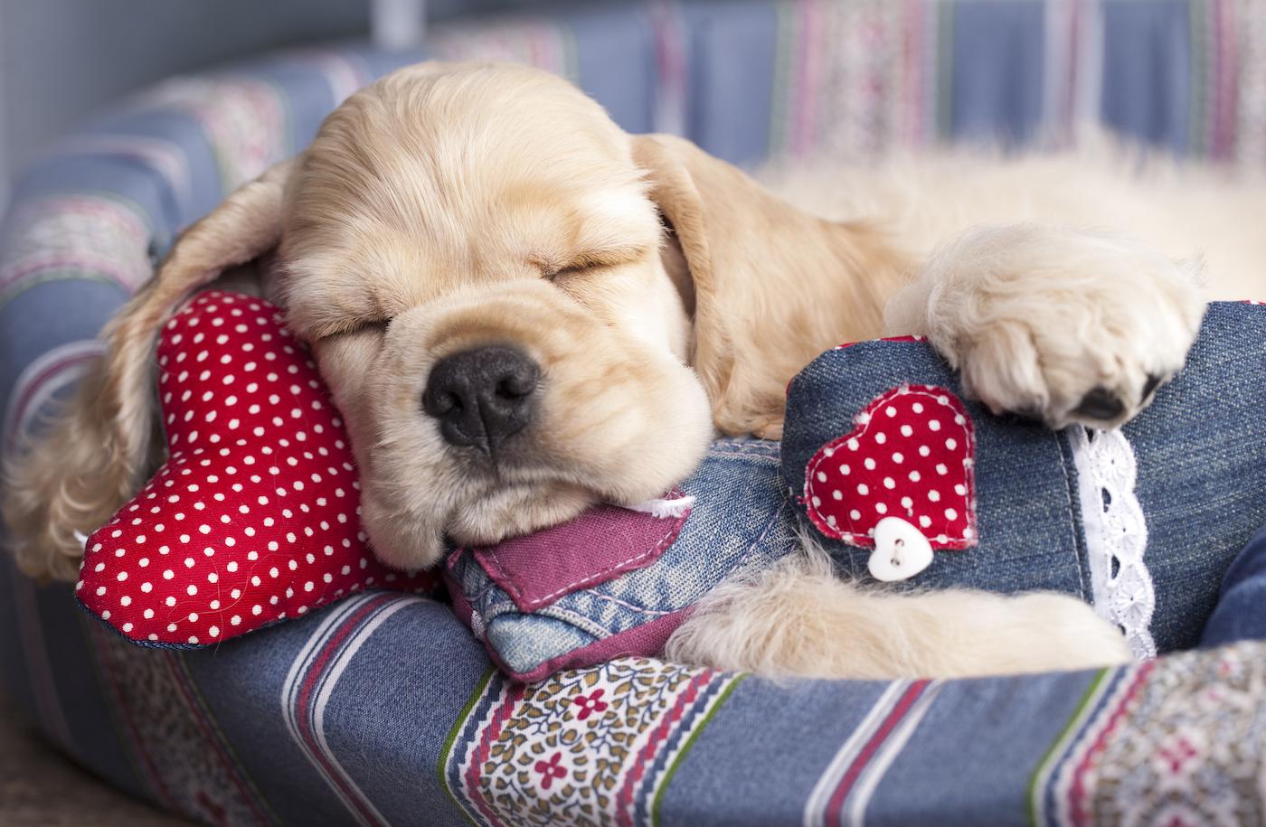 A very sleepy pup